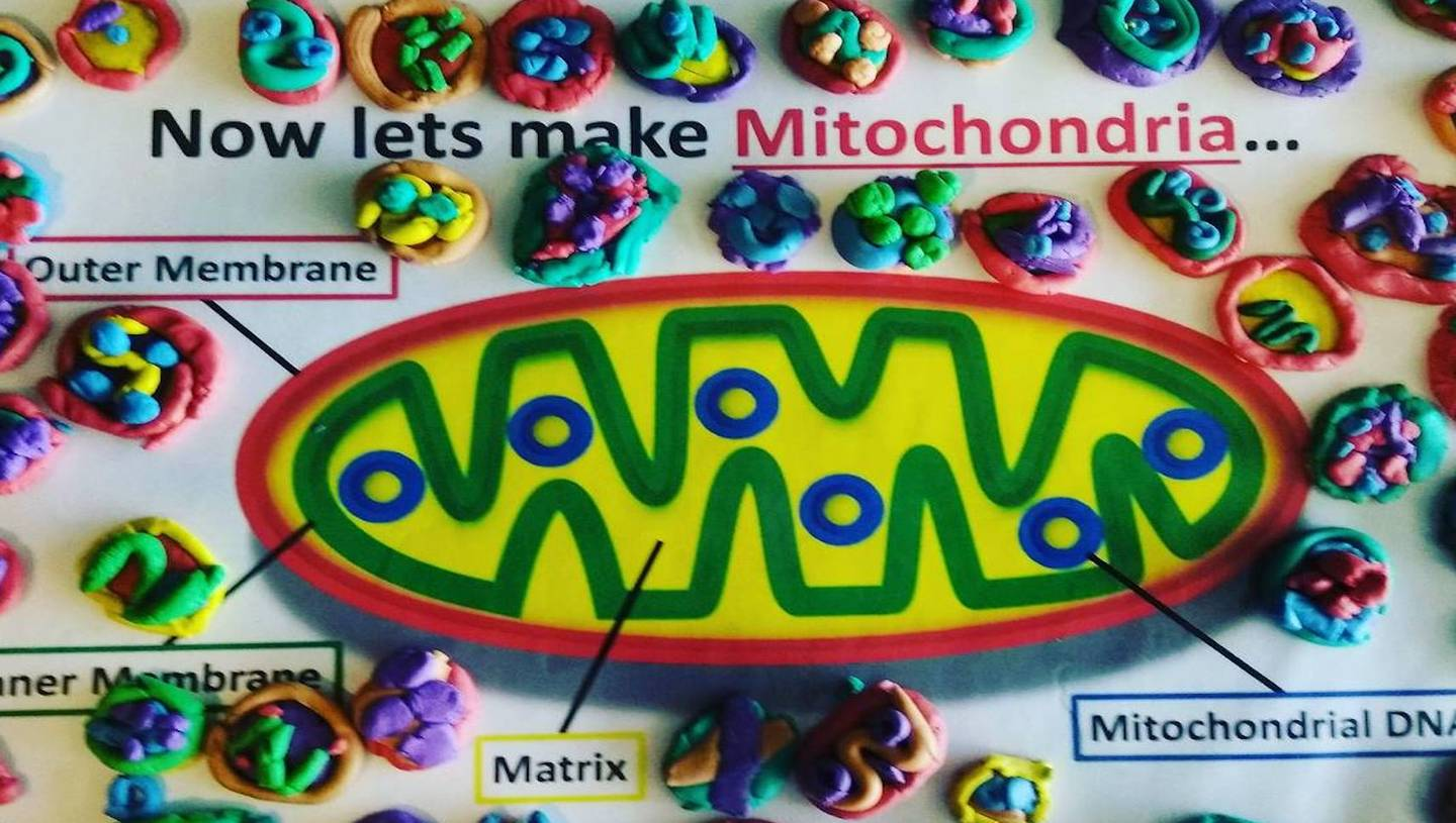 Public engagement for the Welcome Centre for Mitochondrial Research